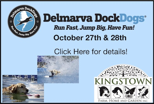 Dock Dogs at Kingstown Farm Home and Garden